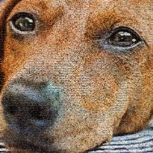 dieren-hond