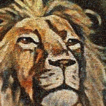 dieren-leeuw