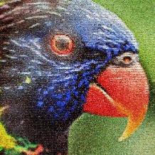 dieren-papagaai
