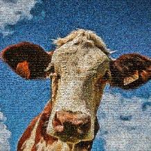 koeien-blauwehemel